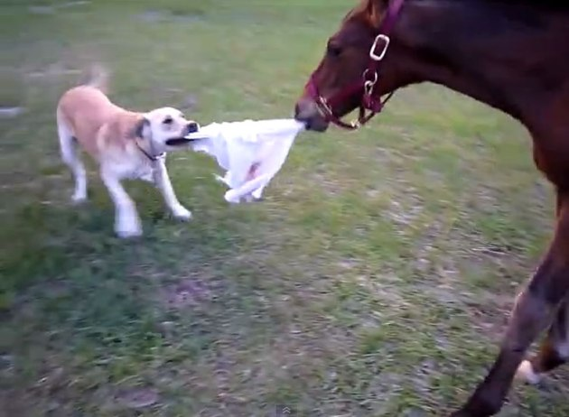 dog-and-horse-play-tag
